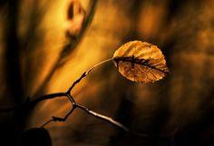 30 Crisp and Refreshing Leaf Photographs