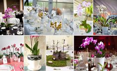 New Product Alert! Orchid Plant Centerpieces!
