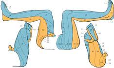 20 pelvic anatomy ideas  anatomy pelvic floor pelvic