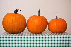 Allotment pumpkins | Flickr - Photo Sharing!