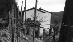 Vigna, Casa , Bosco ... Www.nicobio.it