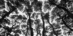 Bae, Bien-U's Sacred Wood
