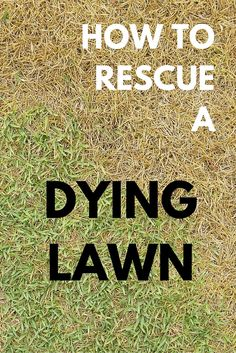 7 Remes To Rescue A Dying Lawn