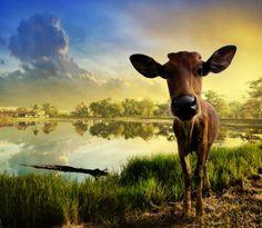 Animal photography 26