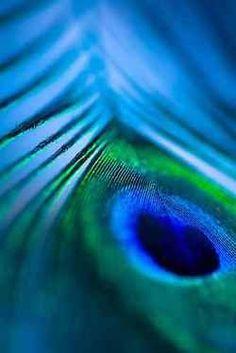 Blues peacock feather - colour inspiration for Latch Farm Studioswww.latchfarmstud…