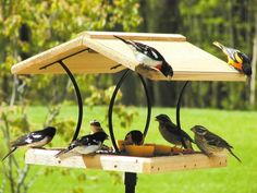 The best images of bird feeders for home decoration : Images Of Bird Feeders In Gallery. Images of bird feeders in gallery. best bird feeders,bird feeders,images of feeders Unique Bird Feeders, Bird Feeder Craft, Bird Feeder Plans, Bird House Feeder, Wooden Bird Feeders, Ground Bird Feeder, Large Bird Feeders, Large Bird Houses, Best Bird Feeders