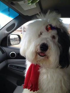 36a4f9c8705 I loved going to the office with Mom and Dad! English Dogs