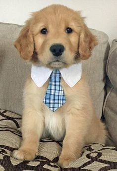 I wouldn't mind if he showed up on Mothers Day Jack the Golden Retriever Pictures 1053048