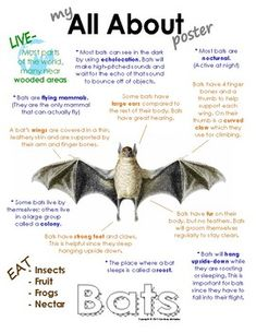 My All About Bats Book - (Woodland, Forest, North American Animals). Also available in a bundle pack with Squirrels, Deer, Skunk and Owls. Animal Facts For Kids, Fun Facts About Animals, Facts About Bats, Forest Animals, Woodland Animals, Woodland Forest, Jaguar Animal Facts, First Grade Themes, All About Bats
