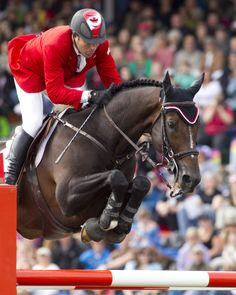 Hickstead, a Canadian international show jumper and Olympic individual show jumping gold medal winner.