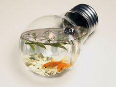 bulb fish tank