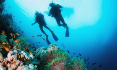 Royal Caribbean Roatan Certified 2-Tank Boat Dive Without Equipment