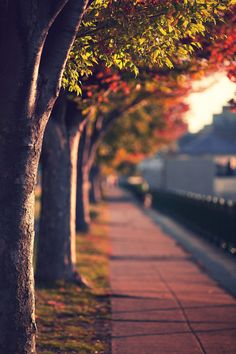 ImageFind images and videos about photography, nature and autumn on We Heart It - the app to get lost in what you love. Photo Background Images Hd, Blur Background Photography, Photo Backgrounds, Photography Backgrounds, Picsart Background, Blurred Background, Scenery Wallpaper, Landscape Wallpaper, Image Nature