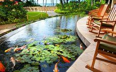 Sheraton Waikiki Hotel - koi pond