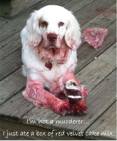I am not a killer.  I only ate a box of Red Velvet Cake Mix.