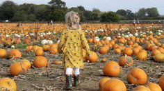 A Trip to the Pumpkin Patch | Pick Your Own Pumpkins, Ashford 2017 | Emily and Indiana. Pumpkin Patch to visit if you live in Kent. Pumpkin Patch photography and fun!
