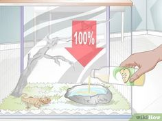 Image titled Teach a Bearded Dragon to Drink from a Water Bowl Step 2