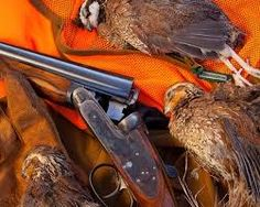 guns dogs - Buscar con Google Quail Hunting, Pheasant Hunting, Turkey Hunting, Hunt Club, Double Barrel, Guns, Google, Hunting, Dogs