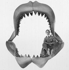 Die berühmte Kieferrekonstruktion eines Megalodons (von Bashford Dean, 1909), heute als übertrieben eingeschätzt.