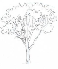 Oak SBS 4