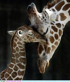 Aw, mommy and baby snuggle.