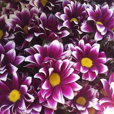 Хризантемки. Цветы с доставки.  Звоните/пишите viber: +992-50-00-00-426  #букет #цветы #таджикистан #душанбе #доставкацветов #delivery #tjk #flowersdelivery