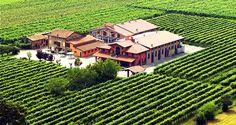 Leonardi Balsamic Farm, Modena, Italy