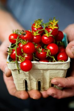 Ineffable Secrets to Growing Tomatoes in Containers Ideas. Remarkable Secrets to Growing Tomatoes in Containers Ideas. Fruit And Veg, Fruits And Vegetables, Fresh Fruit, Fresh Cherry, Plum Tomatoes, Cherry Tomatoes, Patio Tomatoes, Small Tomatoes, Tomato Garden