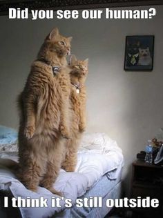 awwwww! I think I read that the owner said ths is how they watch birds!