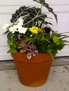good assortment for shady location Planter Pots, Concept, Pictures, Photos, Grimm