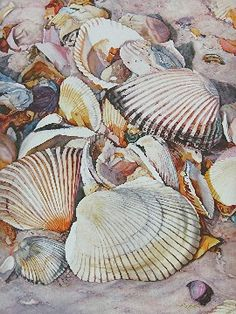Watercolor painting of shells on the beach...wonderful detail.