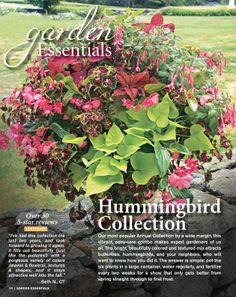 White Flower Farm Catalogs