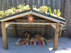 Awesome succulent roof dog house my mom made for her pup.