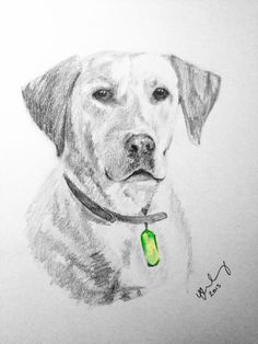 """""""Pixie Pups"""" Labrador dog drawn in pencil. Labradors have such a range of expressions and have a lovely character. She looks very proud in this picture. I sometimes like to add a tiny detail in colour which started after drawing my son with the ladybird, which is also on my 'Sketches' board :-)"""