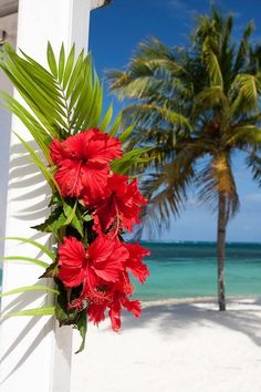 Red hibiscus flowers on a white pillar in the Caribbean. Palm tree and sea.