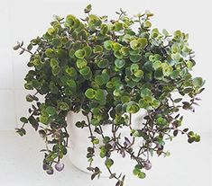 Top 10 Indoor Plants Hanging Plants, Indoor Plants, Mother In Law Tongue, Swiss Cheese Plant, Fertilizer For Plants, Types Of Succulents, Peace Lily, Monstera Deliciosa, Pink Bubbles
