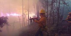 Por instrucciones del gobernador de Michoacán, Silvano Aureoles, toda conflagración suscitada en los bosques de la entidad es atendida de inmediato y de manera coordinada, subraya el director general de ...