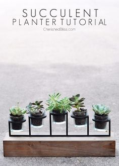 20-succulents-in-things-best-of-pinterest-14