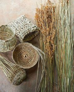 SYMBIOSIS 〰 RECIPROCITY To me, there are not many sweeter ways to spend a day than in my shed studio listening to Braiding Sweetgrass by Potawatomi woman, pl Willow Weaving, Basket Weaving, Rope Basket, Diy And Crafts, Arts And Crafts, Pine Needle Baskets, Diy Accessoires, Pine Needles, Weaving Art