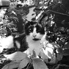 Kitten in the sun Kitten, Cats, Blog, Animals, Sun, Cute Kittens, Kitty, Gatos, Animales