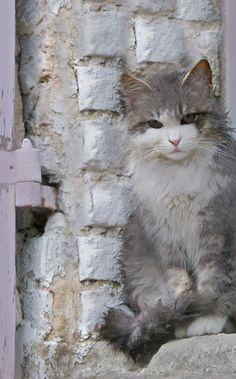"""Lord Byron aprendió de su <a class=""""pintag searchlink"""" data-query=""""%23gato"""" data-type=""""hashtag"""" href=""""/search/?q=%23gato&rs=hashtag"""" rel=""""nofollow"""" title=""""#gato search Pinterest"""">#gato</a>  Boastwain: El ser fuerte, bello o poderoso se reconoce en que no necesita exhibir sus virtudes. En cambio, es propio de débiles compararse enfermizamente con los demás, hacer ostentación y buscar el reconocimiento externo. La verdadera fuerza debe ser invisible a los ojos ajenos."""