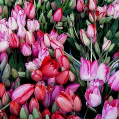The best thing about Spring are the tulips