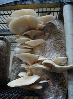Love mushrooms? Learn how to grow them on salvaged logs | Made + Remade