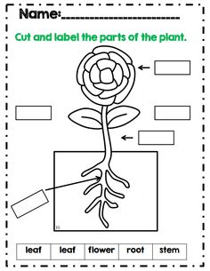Label The Plant Parts Part Of 25 Page Plants Unit