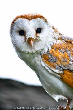 Owl  8x12 by MTorresPhototgraphy on Etsy, $18.00