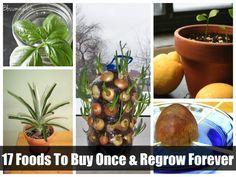 Recipes, Projects & More - 17 Foods To Buy Once And Regrow Forever Indoor Plants, Indoor Garden, Outdoor Gardens, Herb Garden, Garden Plants, Home And Garden, Garden Fun, Patios, Container Gardening