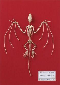 dragon skeleton, I soooo need this Dragon Skeleton, Bat Skeleton, Animal Skeletons, Animal Skulls, Dragon Anatomy, Dragon Project, Indominus, Anatomy Art, Animal Anatomy