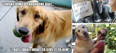 31 hilarious struggles only dog owners will understand. The #9 cracked me up!