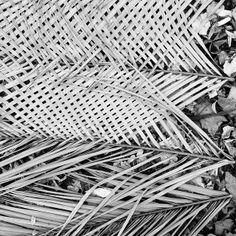 jardim do ultramar by Rosa Pomar, via Flickr