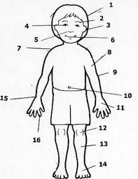 This free sample lesson on el cuerpo, the body, is from an elementary Spanish curriculum from Sonrisas Spanish School . It is well-organiz. Spanish Lessons For Kids, Preschool Spanish, Spanish Lesson Plans, Elementary Spanish, Spanish Activities, French Lessons, Class Activities, Spanish Worksheets, Spanish Vocabulary